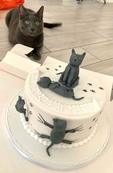 cats cake customers photo