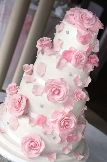 Pink sugar roses Compton Acres